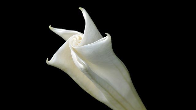 Flower, White, Romantic, Nature, Petal, Flora, Blossom