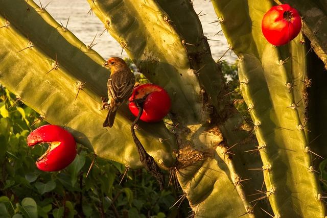 Nature, Fruit, Flora, Cactus, Finch, House Finch
