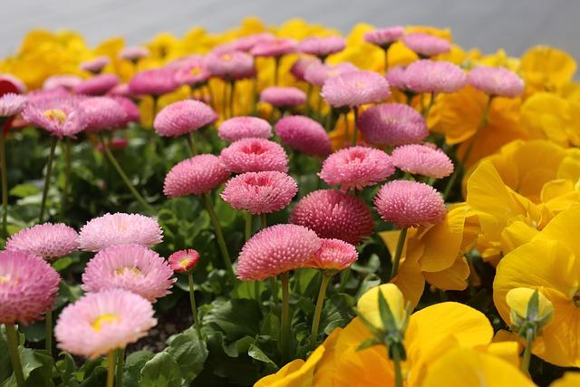 Flower, Nature, Flora, Floral, Garden