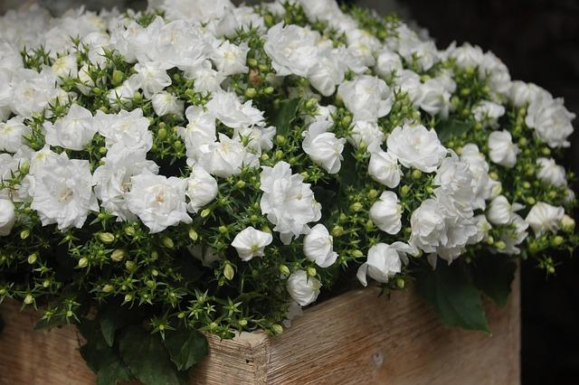 Flower, Nature, Bouquet De Fleurs, Floral