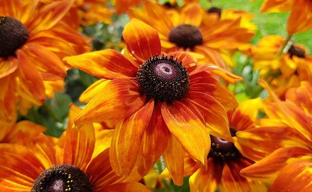 Blossom, Bloom, Flower, Plant, Nature, Floral, Garden