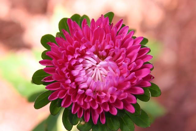 Flower, Plant, Nature, Floral, Garden