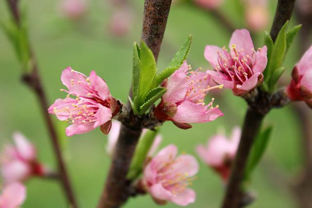 Flower, Flora, Nature, Tree, Branch