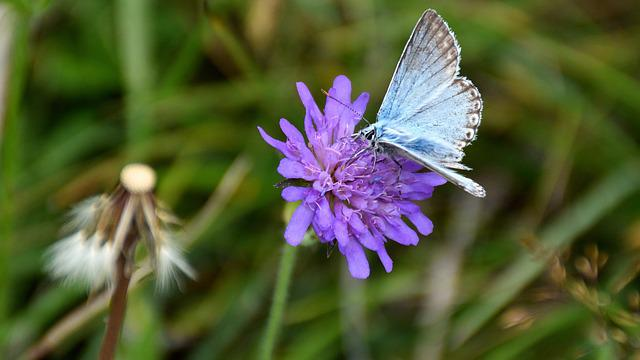 Butterfly, Flower, Nature, Insect, Animal