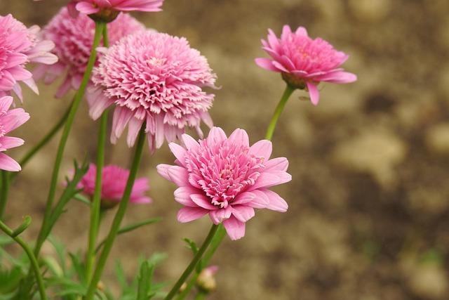 Flower, Pink, Flourishing, Pink Flower, Nature, Closeup