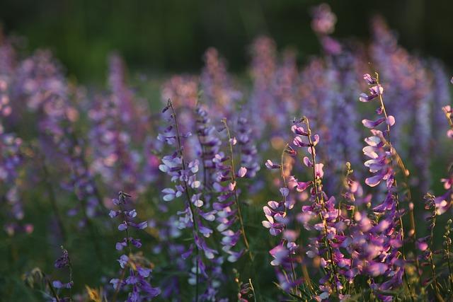 Clover, Nature, Flower, Plant