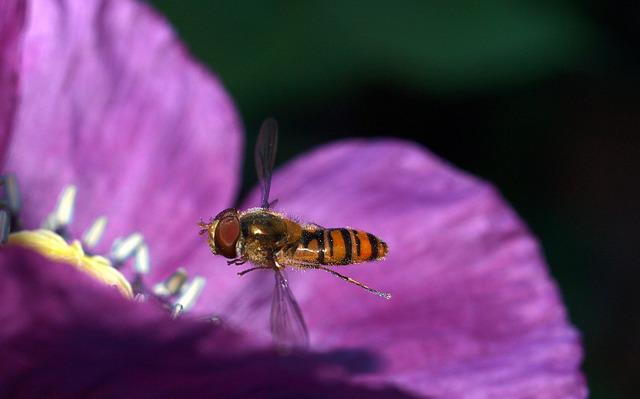 Insect, Nature, Bee, Flower, Pollen, Fly, Pollination