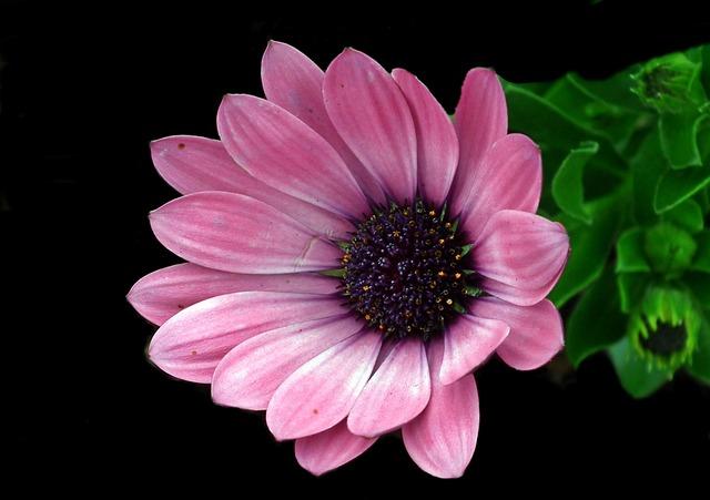 Plant, Flower, Nature, Petal, Floral, Garden, Closeup