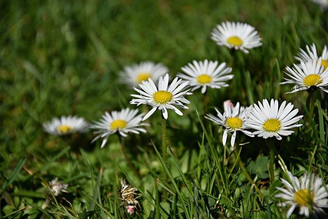 Nature, Grass, Plant, Flower
