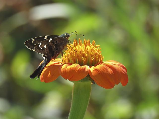 Nature, Insect, Flower, Butterfly