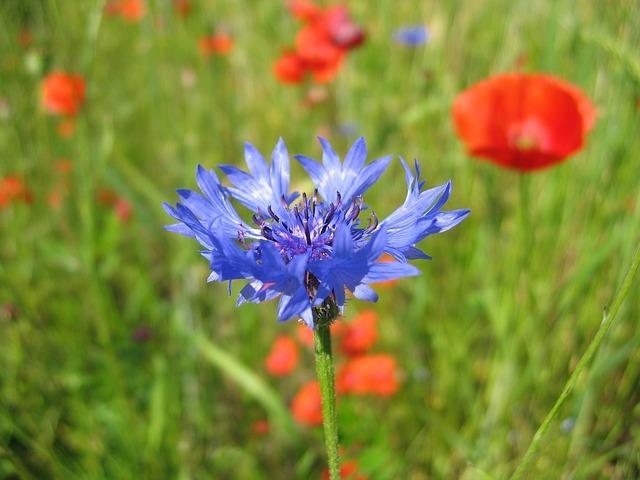 Nature, Hayfield, Field, Flower, Lawn
