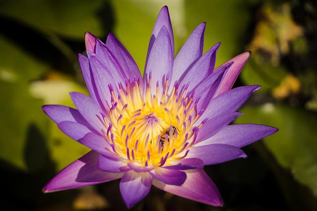 Lotus, Pool, Flora, Aquatic, Flower, Leaf, Nature