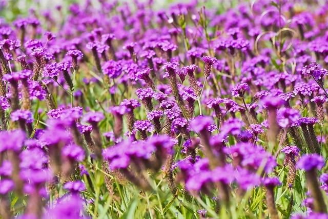 Flower Meadow, Flowers, Nature, Meadow, Wild Flowers