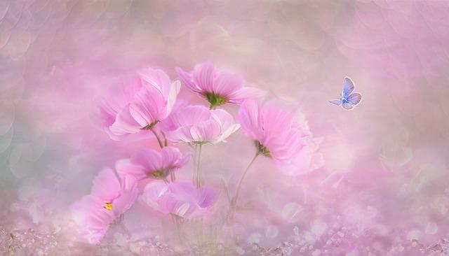 Flower, Nature, Plant, Color, Background, Summer