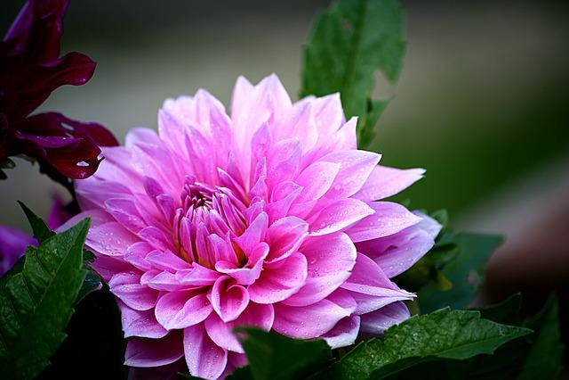 Flower, Plant, Nature, Sheet