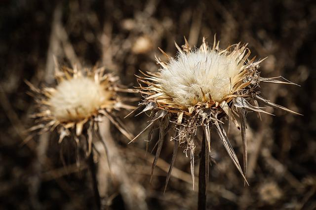 Thistle, Flower, Blossom, Bloom, Nature, Prickly, Plant