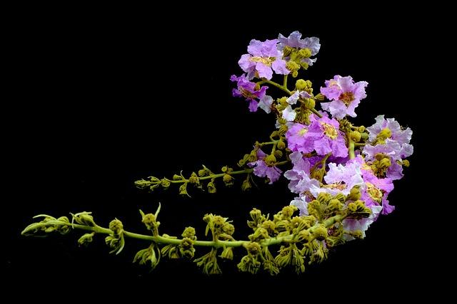 Floribunda, Purple, Plant, Nature, Flower, Color