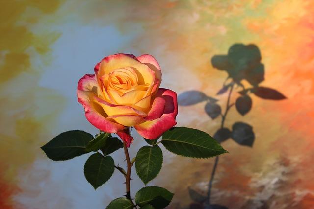 Flower, Leaf, Plant, Nature, Rose, Color, Floral