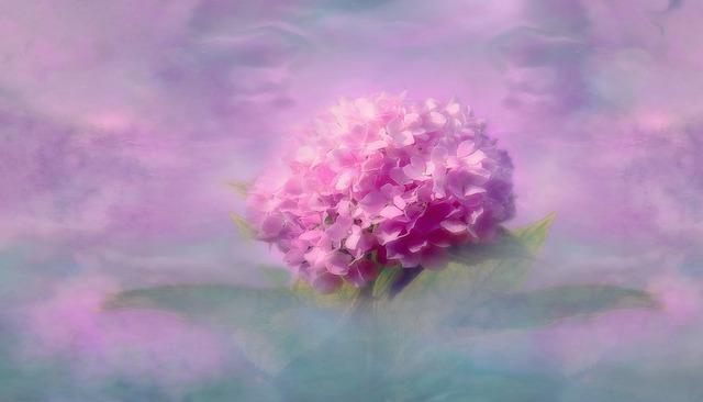 Nature, Summer, Flower, Plant, Blossom, Bloom, Macro