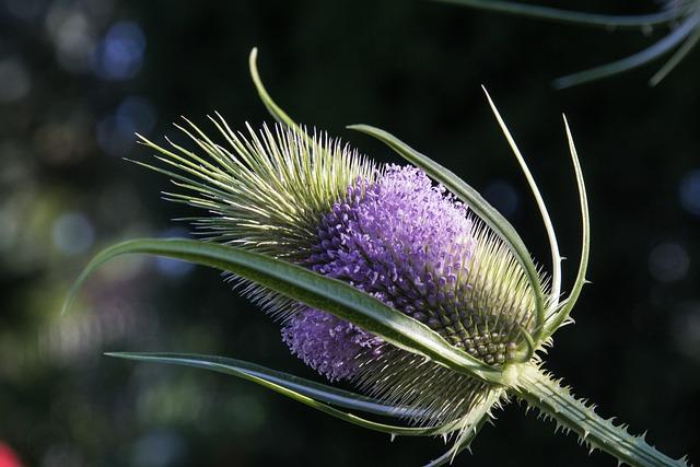 Nature, Flower, Plant, Summer, Close, Thistle