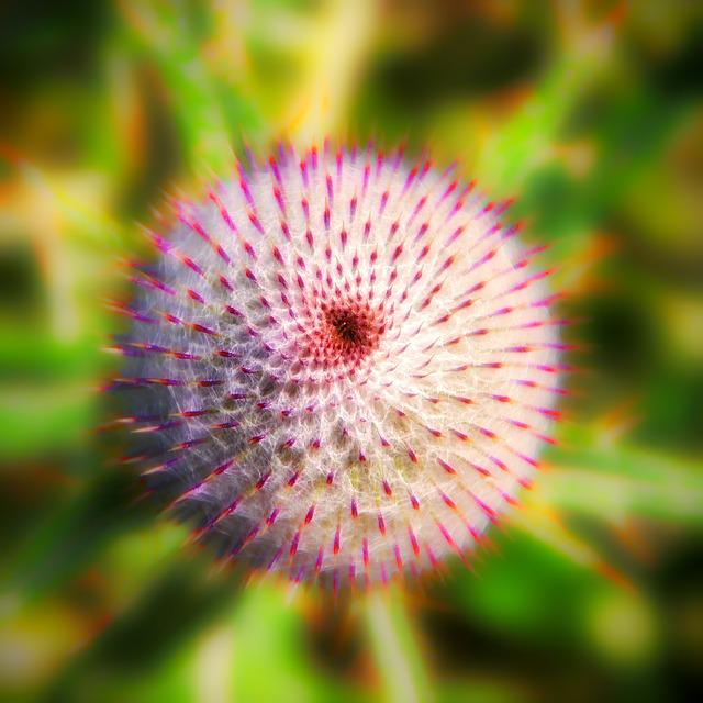Plant, Thistle, Nature, Flower, Thorn, Spur, Sharp