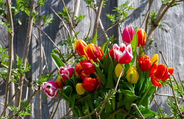 Tulips, Colorful, Tulip Bouquet, Nature, Flower
