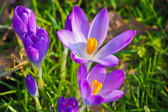 Flowers, Spring, Blossom, Bloom, Nature, Plant, Close