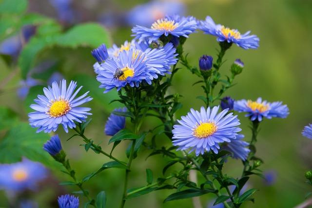 Nature, Plant, Flower, Summer, Leaf, Garden, Flowers