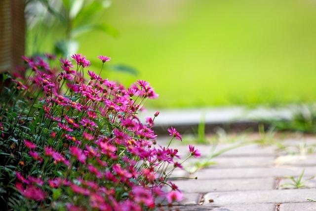 Flowers, Nature, Garden, Plants, Summer, July