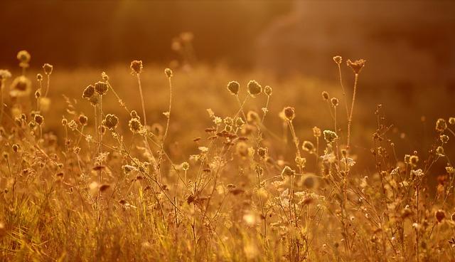Flowers, Sunset, Nature, Red, Landscape, Vegetation