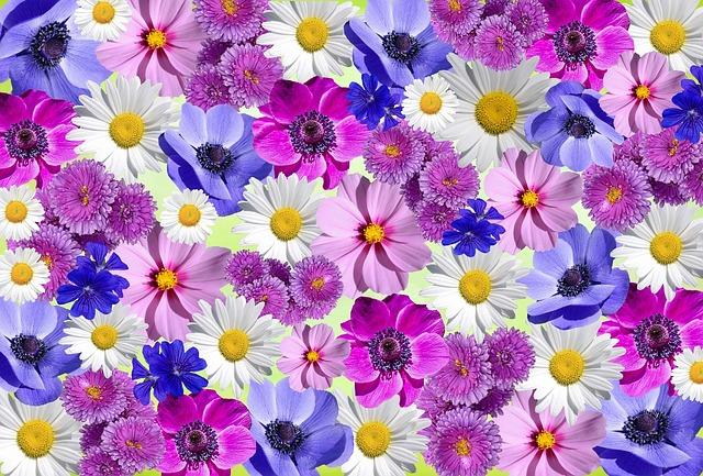 Flowers, Nature, Plant, White Blossom, Summer