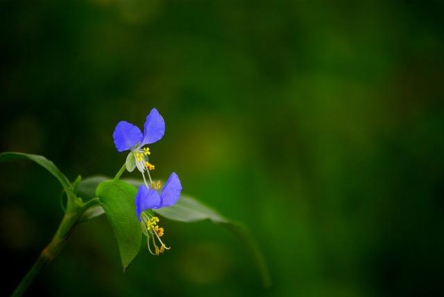 Nature, Leaf, Flowers, Outdoors, Plants, Wildflower