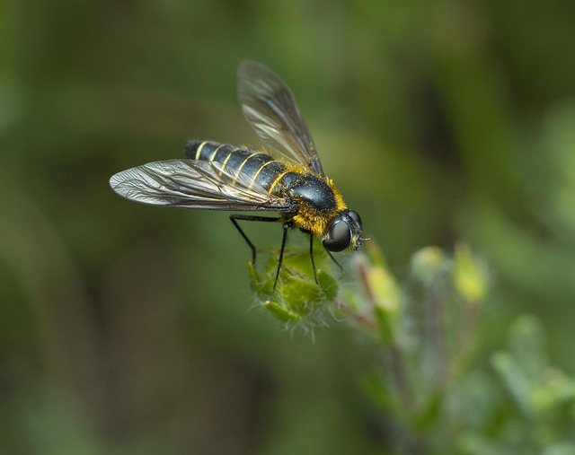 Insect, Nature, Fly, Wing, Animal