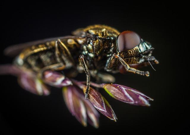 Insect, Fly, Nature, Bespozvonochnoe, Macro