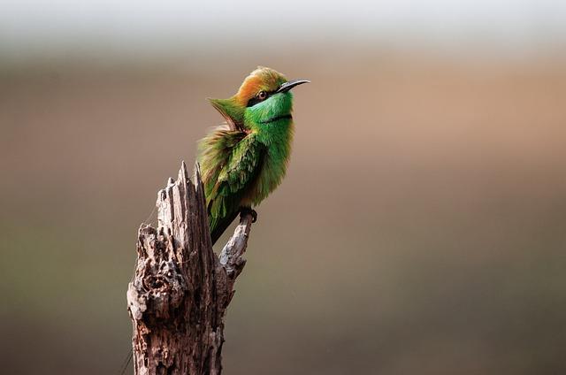 Wildlife, Nature, Bird, Wings, Fly, Green