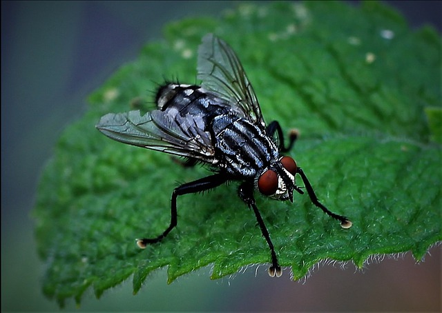 Fly, Close Up, Housefly, Macro, Animal, Nature, Wing