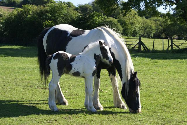 Mare And Foal, Foal, Piebald, Mare, Equine, Nature
