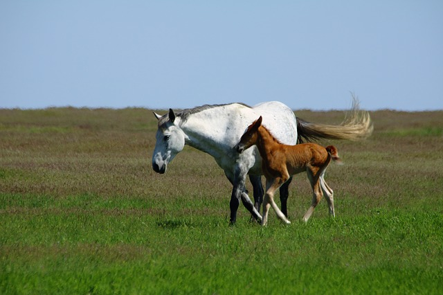 Horses, Foal, Mare, Mammal, Animal, Nature, Equine