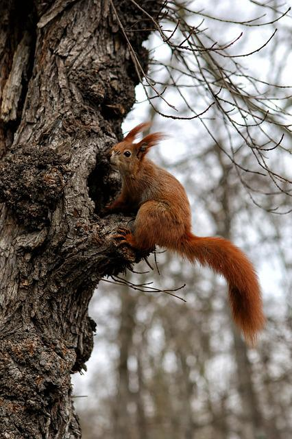 Squirrel, Animal, Nature, Forest
