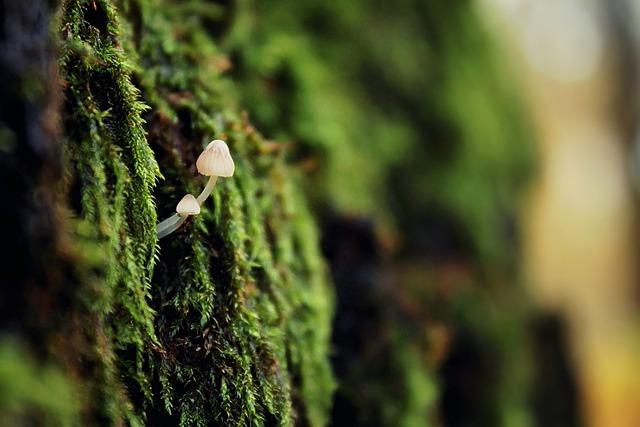 Mushroom, Green, Nature, Litter, Moss, Forest, Closeup