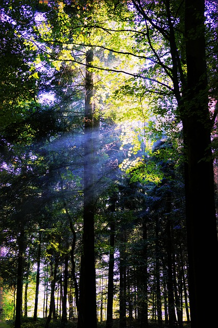 Forest, Trees, Nature, Landscape, Sunbeam, Light, Green