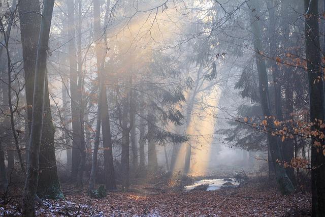 Sun, Sun Steel, Forest, Mood, Landscape, Nature