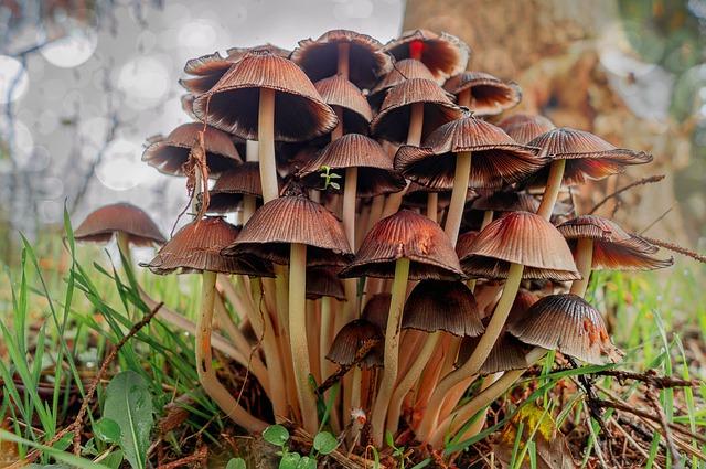 Mushrooms, Nature, Forest, Autumn