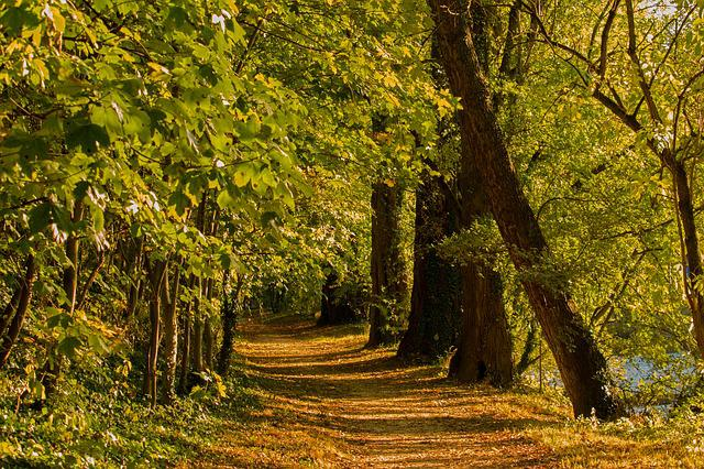Forest Path, Autumn, Forest, Nature, Trees, Landscape