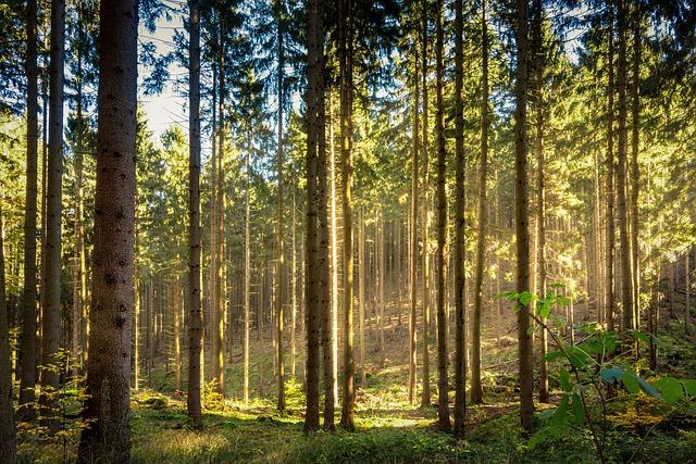 Forest, Sun, Sunbeam, Autumn, Fall Foliage, Nature