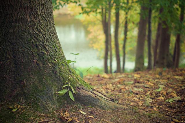 Nature, Forest, Tree, Trunk, Wood, Roots, Leaves