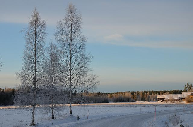 Winter, Snow, Nature, Frost, Cold, Tree, Landscape