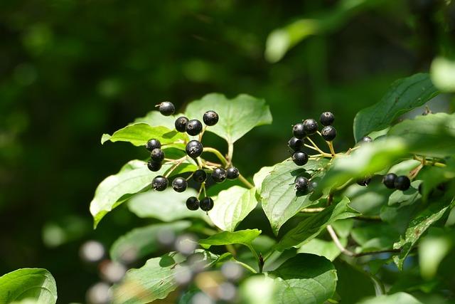 Leaf, Nature, Plant, Fruit, Summer, Tree, Close, Growth