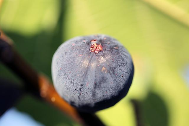 Fig, Nature, Fruit, Summer