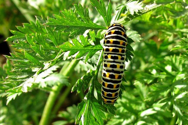 Garden, Caterpillar, Dovetail, Nature, Summer, Plant